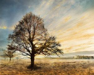 Πίνακας καμβάς Δέντρο
